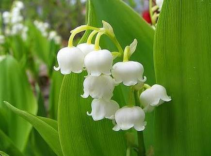 muguet2 9 Tips in 9 Days for Shopping France's Outdoor Markets, Part 7